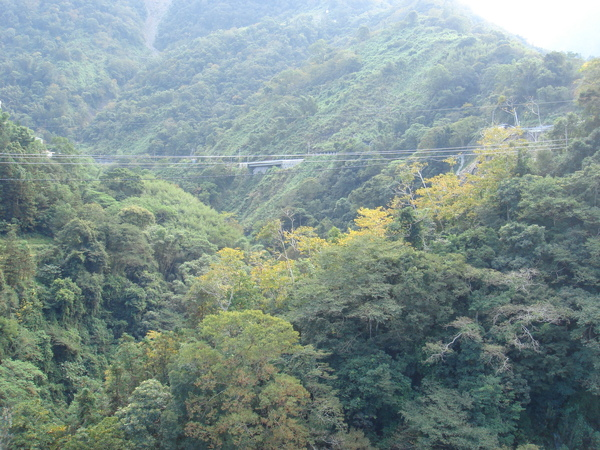 東埔吊橋的風景