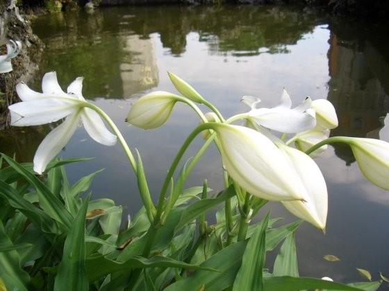 真理-不知名的花
