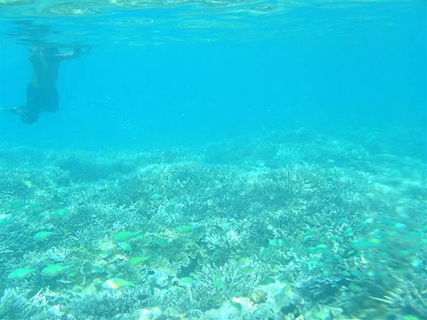第一次正式浮潛