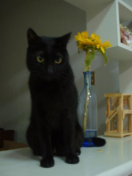 黑貓不管站在哪裡就是要像隻黑貓