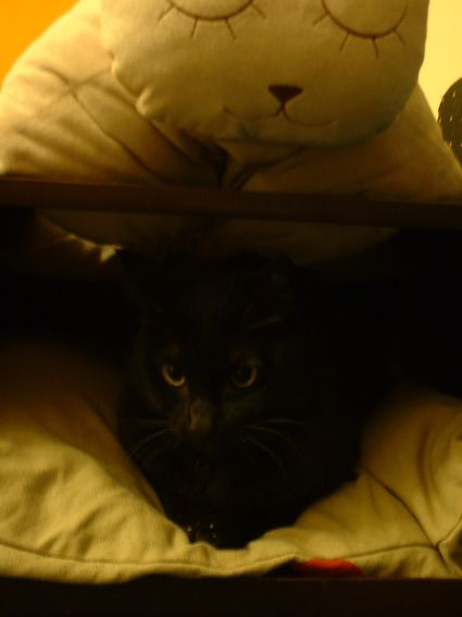 可是奇奇都縮在媽給他做的貓窩裡不出來陪我玩