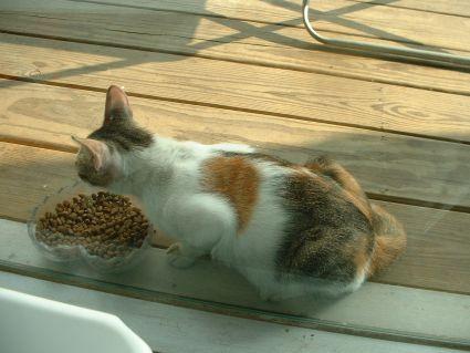 有河book窗外的野貓
