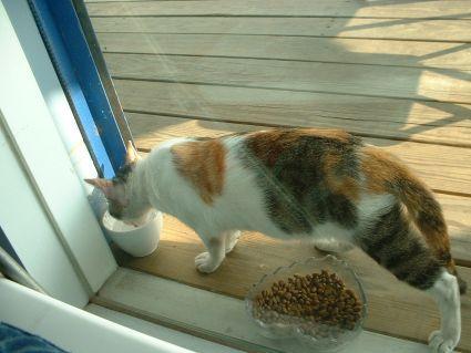 有河book窗外的野貓2