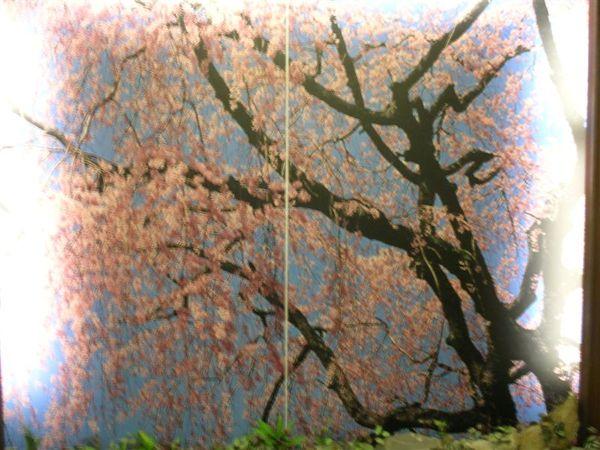 好漂漂的櫻花圖
