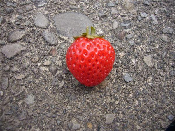 很可愛的一顆小草莓