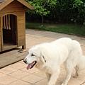 大白和他的小木屋