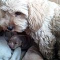 Bobbie與她的Babies