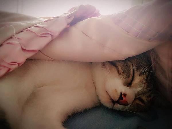 喜歡蓋被被睡覺的蕾蕾