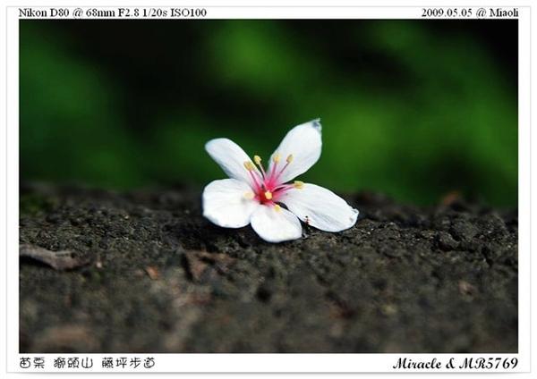 090505_15.JPG