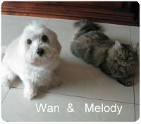 Wan & Melody 001-1.jpg