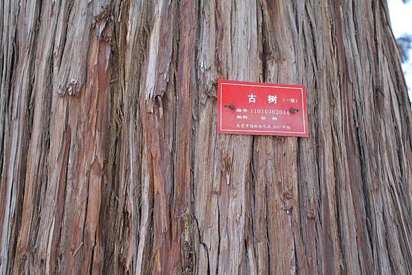 古樹紅牌300年以上歷史
