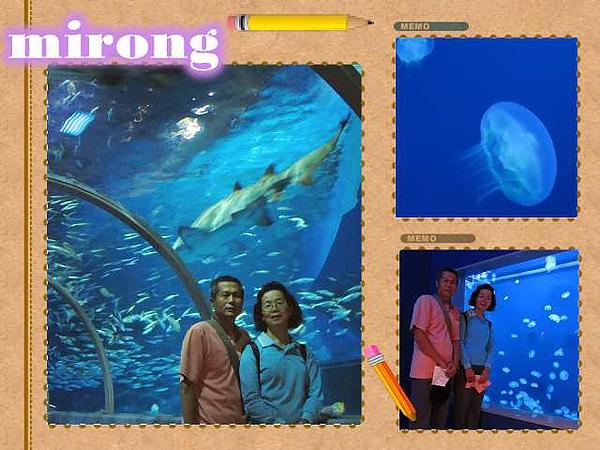 和海底生物合照.jpg