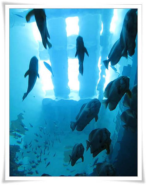 海生館的海底隧道.jpg
