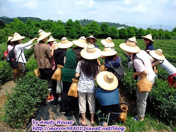 blog 1010627 三泰有機農場09