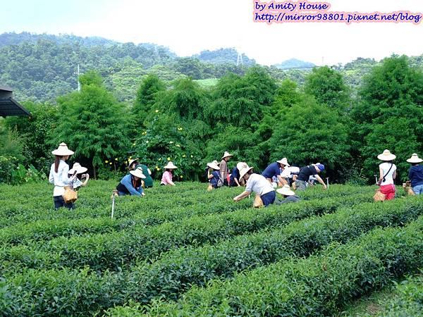 blog 1010627 三泰有機農場11