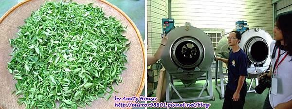 blog 1010627 三泰有機農場14