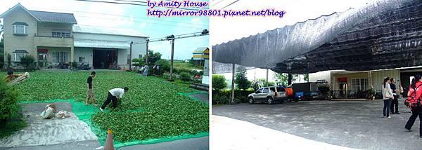 blog 1010627 三泰有機農場23