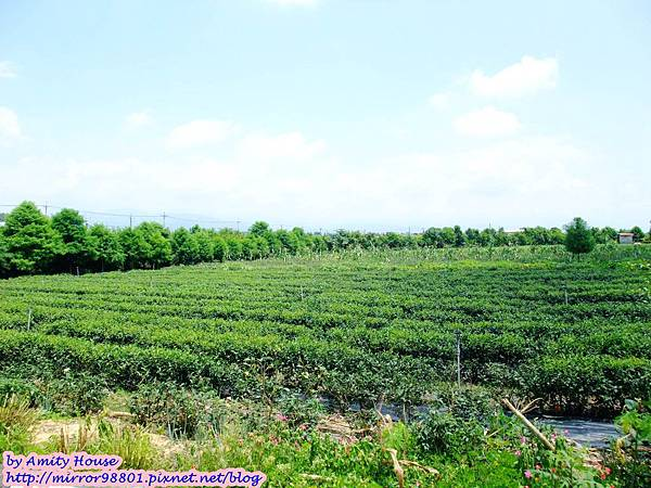 blog 1010627 三泰有機農場25