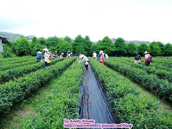 blog 1010627 三泰有機農場26