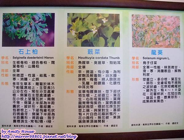 blog 1010627 田媽媽一佳村青草園36