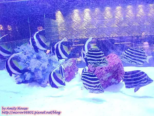 blog 1010320 八海精緻鍋物料理(西門新宿-海洋館)38