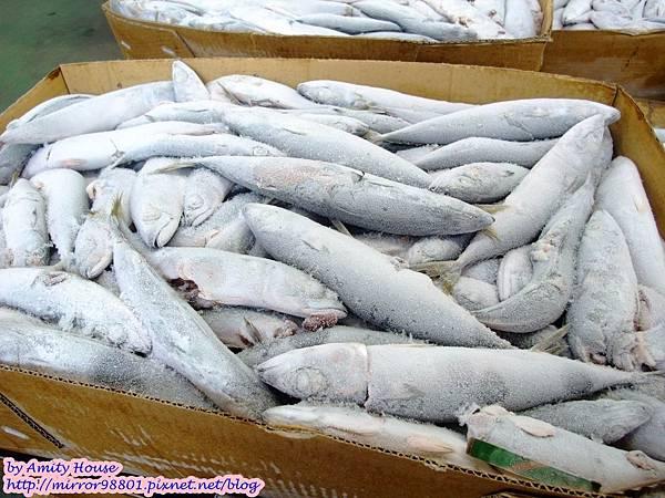1010830 鑫龍食品公司 鹽漬鯖魚09