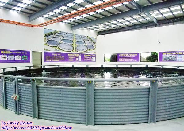 1010830 金車生技水產養殖研發中心 宜蘭礁溪金車履歷鮮蝦養殖場25