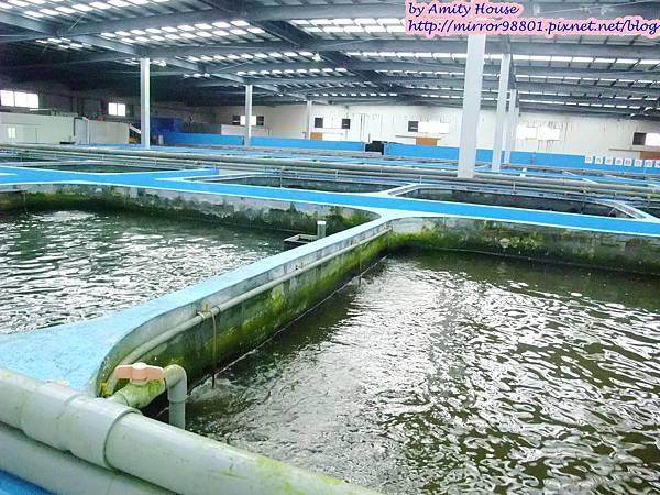 1010830 金車生技水產養殖研發中心 宜蘭礁溪金車履歷鮮蝦養殖場27