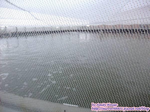 1010830 金車生技水產養殖研發中心 宜蘭礁溪金車履歷鮮蝦養殖場31