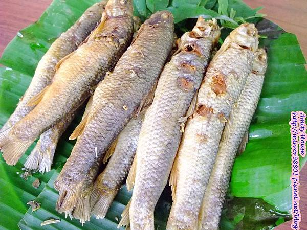 1010917 給樹的家 GESUW給樹營地 泰雅體驗營13苦花魚是烏來著名的本土魚種