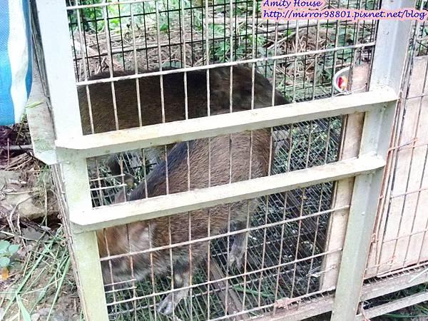 1010917 給樹的家 GESUW給樹營地 泰雅體驗營20