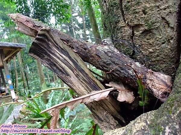 1010917 給樹的家 GESUW給樹營地 泰雅體驗營45