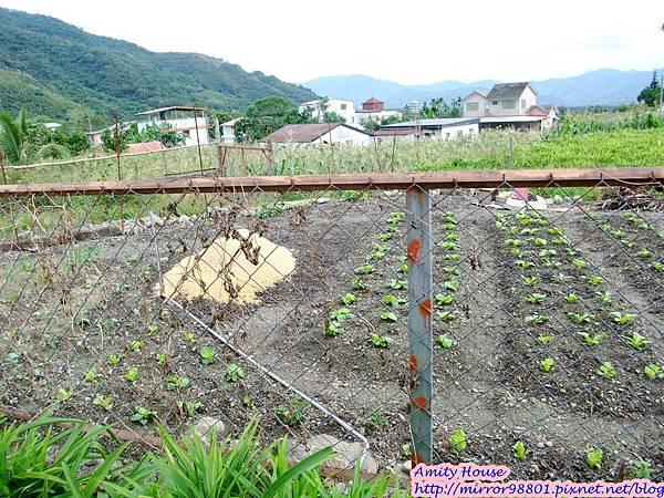 1011103-04台東武陵農村深度體驗026