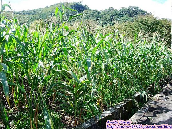1011103-04台東武陵農村深度體驗217