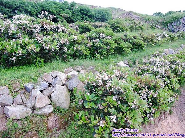 1020502-06東引外島軍旅體驗營289