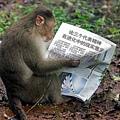台灣瀰猴要加油了.jpg