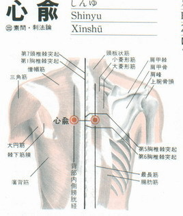 心俞穴是心臟出現異常主治穴2.jpg