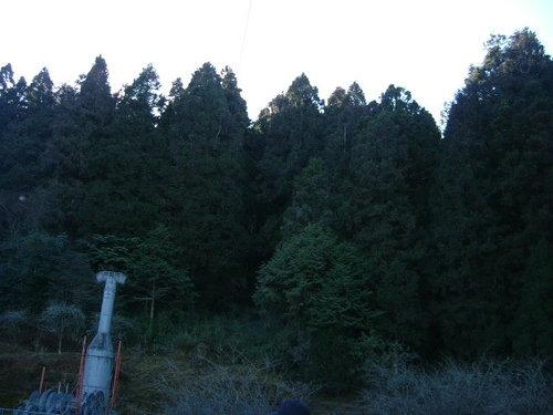 980128-29阿里山08.jpg