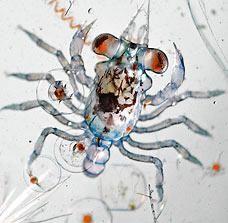 海洋深層水的浮游生物2.jpg