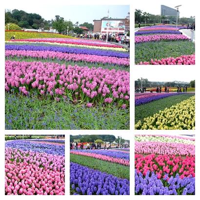 blog 1000217花博 圓山 風信子2.jpg