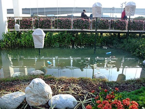 blog 花博 大佳 花圃競賽區 新北市 台北縣06.JPG