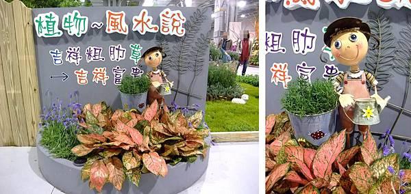 blog 花博 圓山 爭艷館 花舞未來 香草植物 粗肋草12.jpg