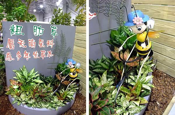blog 花博 圓山 爭艷館 花舞未來 香草植物 粗肋草13.jpg