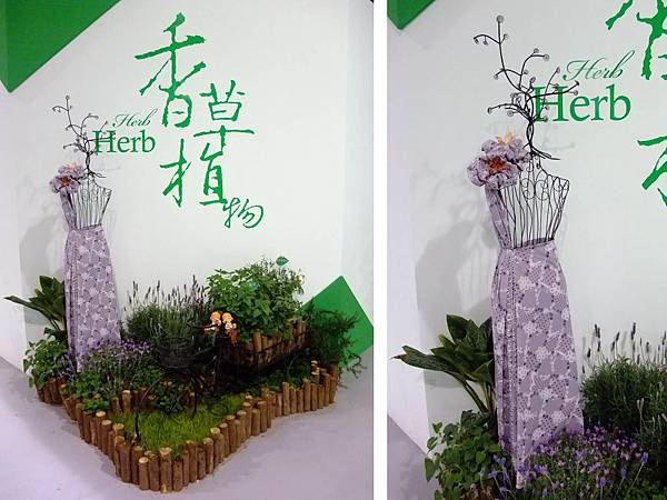 blog 花博 圓山 爭艷館 花舞未來 香草植物 粗肋草20.jpg