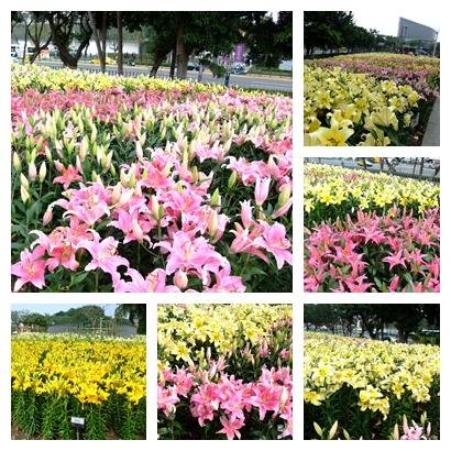 blog 1000217花博 圓山 百合2.jpg