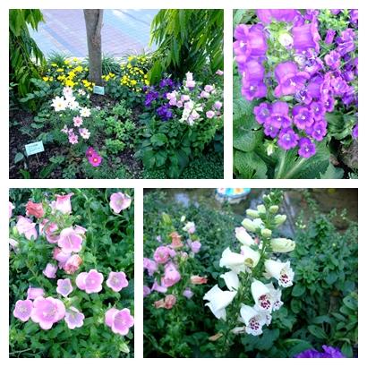 blog 99 Dec 花博 美術 寰宇庭園-不丹18.jpg