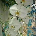 blog 991014花博測試 爭艷館05.JPG