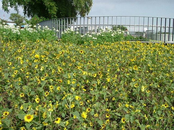 blog 991014花博測試 圓山公園區17.JPG