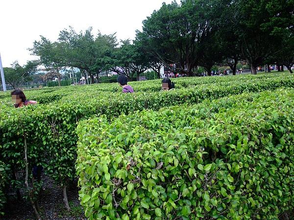 991106花博 新生 迷宮花園04.JPG