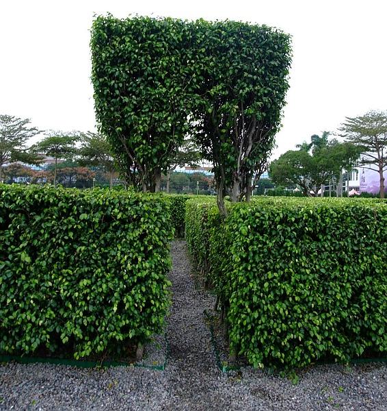 991106花博 新生 迷宮花園11.JPG